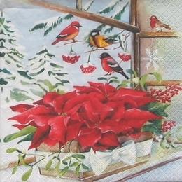 Новогодние растения