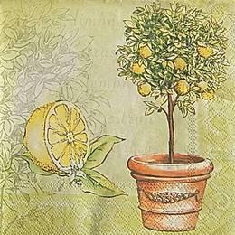 12986. Лимон и дерево