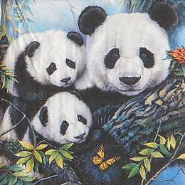 20160. Панды в лесу