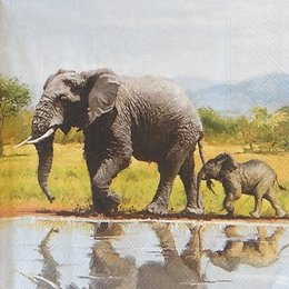 20192. Слоны