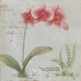 20215. Тигровая орхидея