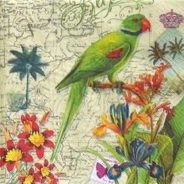 4839. Зеленый попугай.