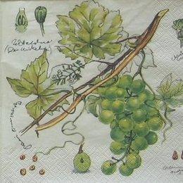 8929. Зеленый виноград. 5 шт., 9 руб/шт