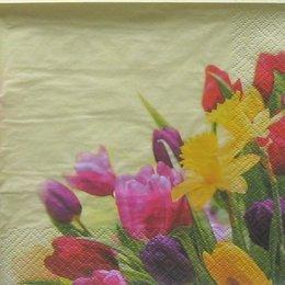 9089. Тюльпаны и нарциссы. 10 шт., 7 руб/шт