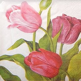 9134. Тюльпаны на белом. 5 шт., 9 руб/шт.