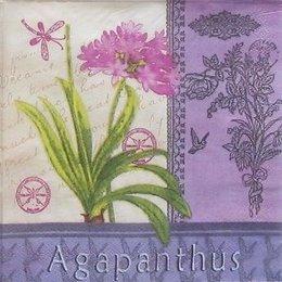9331. Agapanthus. 20 шт., 5,5 руб/шт.