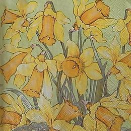 12637. Нарциссы. 5 шт., 17 руб/шт
