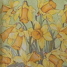 12637. Нарциссы 20 шт., 12 руб/шт