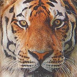 12645. Тигр. 5 шт., 20 руб/шт