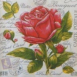 24015. Розы на письменах. Двухслойная. 15 шт., 6  руб/шт