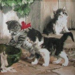 3206. Три котенка
