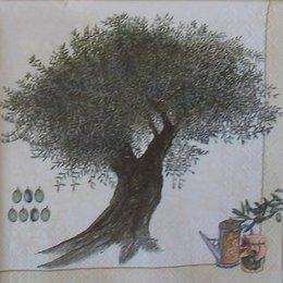 4795. Оливковое дерево