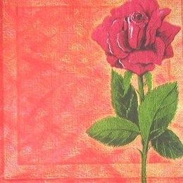 4426. Роза на оранжевом. 5 шт., 10 руб/шт