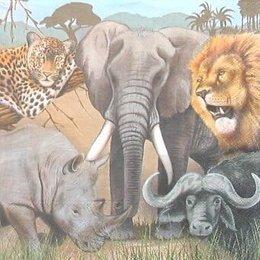 4961.  Животные Африки. 5 шт., 20 руб/шт