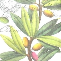 8282. Olive.