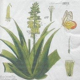 8303. Растения Гватемалы.