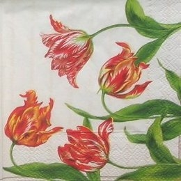8645. Тюльпаны.