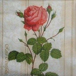 8898.Роза на бежевых полосках. 5 шт., 10 руб/шт