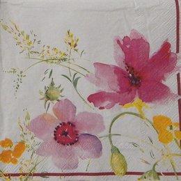 9794. Полевые цветы на белом