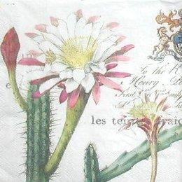 8302. Цветущие кактусы Гватемалы. 10 шт., 9 руб/шт