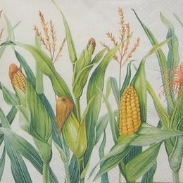 8672. Кукуруза. 5 шт., 12 руб/шт