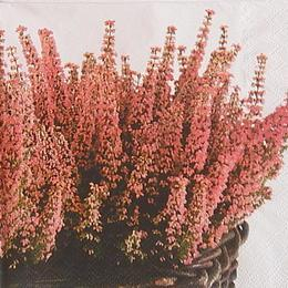 24058. Цветы на розовом. 10 шт., 8 руб/шт