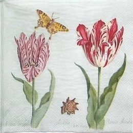 8693. Голландские тюльпаны. 15 шт., 12 руб/шт